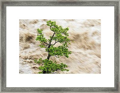 Tree And River In Flood, Banff Framed Print by Peter Adams