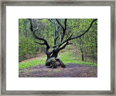 Tree In The Forest Framed Print by Susan Leggett