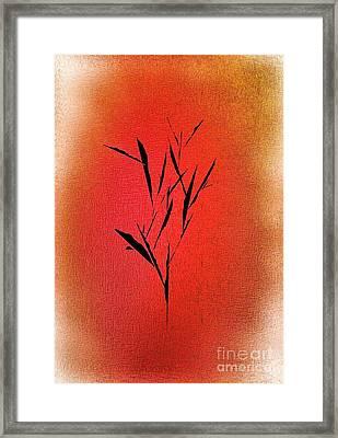 Tree Framed Print by John Krakora