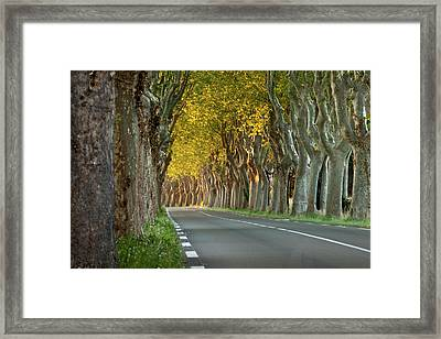 Tree Lined Road Near Saint Remy Framed Print by Brian Jannsen