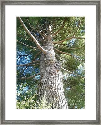 Tree Of Life Framed Print by Andreea Alecu