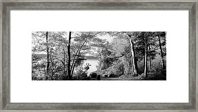 Trees At The Lakeside, Great Sacandaga Framed Print by Panoramic Images