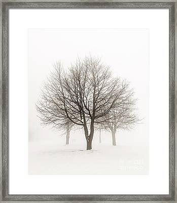 Trees In Winter Fog Framed Print by Elena Elisseeva