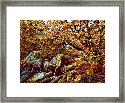 Trees With Granite Rocks At Huelgoat Framed Print by Panoramic Images