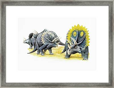 Triceratops Dinosaurs Framed Print by Deagostini/uig
