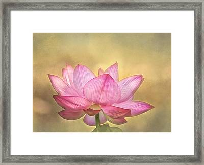 Tropical Lotus Flower Framed Print by Kim Hojnacki
