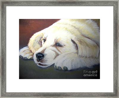 Tuckered Out Framed Print by Amber Nissen