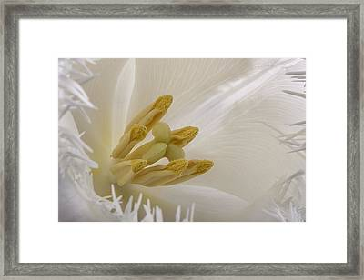 Tulip Framed Print by Mark Johnson
