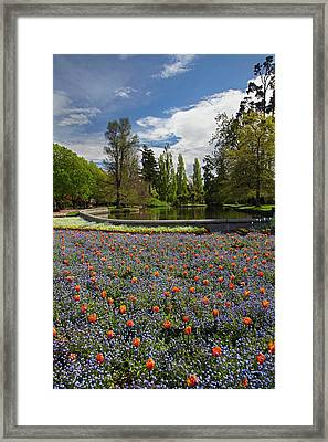 Tulips And Pond, Ashburton Domain Framed Print by David Wall