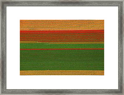 Tulips Fields, Lisse Framed Print by Bram van de Biezen