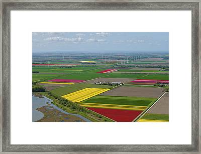 Tulips Fields, Zeewolde Framed Print by Bram van de Biezen