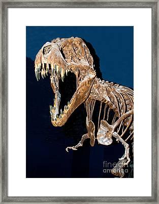 Tyrannosaurus Rex Framed Print by Millard H. Sharp