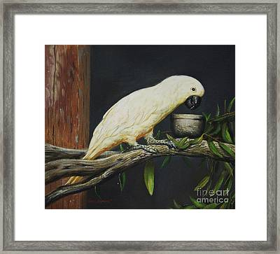 Umbrella Cockatoo Framed Print by Alberto Herrera
