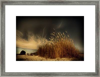Untitled Framed Print by Miki Meir Levi
