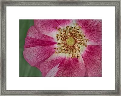 Up Close  Framed Print by Susan Candelario