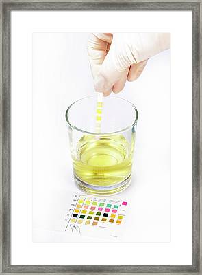 Urine Home Test Kit Framed Print by Cordelia Molloy