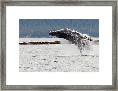 Usa, Alaska, Frederick Sound Framed Print by Jaynes Gallery