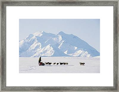 Usa, Alaska, Sled Dogs, Park Ranger Framed Print by Gerry Reynolds