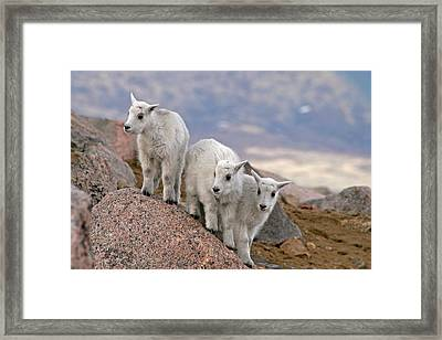 Usa, Colorado, Mt Framed Print by Jaynes Gallery