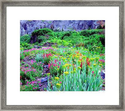 Usa, Colorado, Wildflowers In Yankee Framed Print by Jaynes Gallery