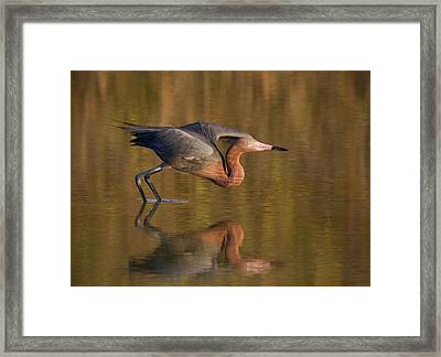 Usa, Florida, Ft Framed Print by Jaynes Gallery