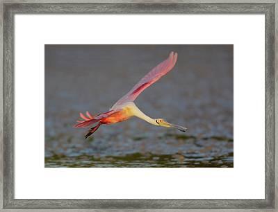 Usa, Florida, Tampa Bay, Alafaya Banks Framed Print by Jaynes Gallery