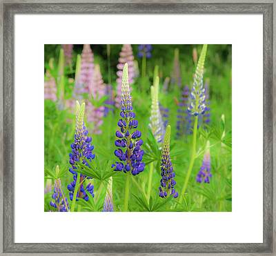 Usa, Maine, Acadia National Park Framed Print by Jaynes Gallery