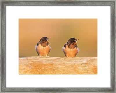 Usa, Red Rock Lakes National Wildlife Framed Print by Elizabeth Boehm