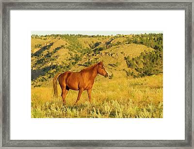 Usa, South Dakota, Wild Horse Sanctuary Framed Print by Jaynes Gallery