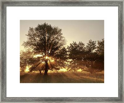 Usa, Tennessee, Great Smoky Mountains Framed Print by Ann Collins