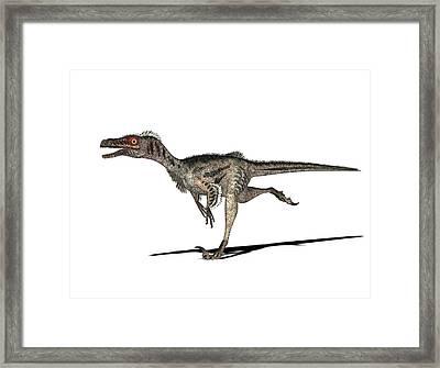 Velociraptor Dinosaur Framed Print by Friedrich Saurer