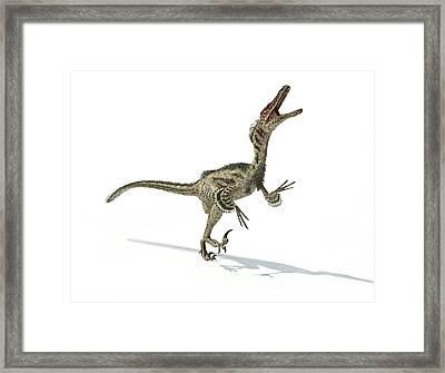 Velociraptor Dinosaur Framed Print by Leonello Calvetti