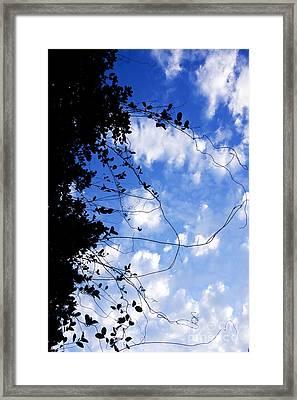 Vine-tangle Framed Print by Jorgo Photography - Wall Art Gallery