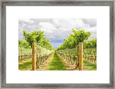 Vineyard Framed Print by Patricia Hofmeester