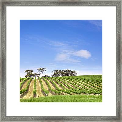Vineyard South Australia Square Framed Print by Colin and Linda McKie