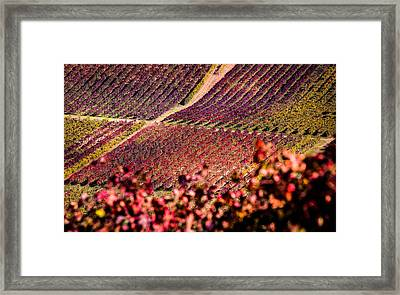 Vineyard Framed Print by Stefano Termanini