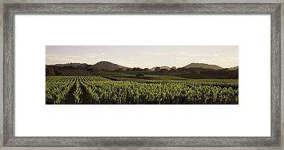 Vineyard With Mountains Framed Print by Panoramic Images