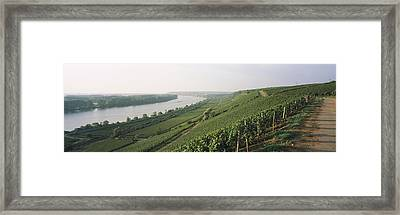 Vineyards Along A River, Niersteiner Framed Print by Panoramic Images