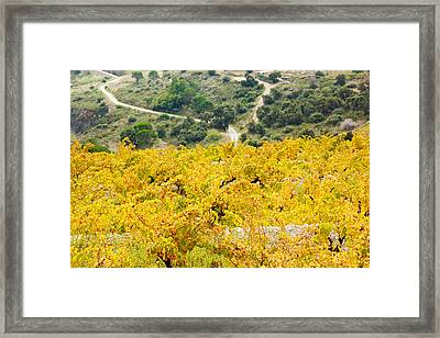Vineyards, Collioure, Vermillion Coast Framed Print by Panoramic Images