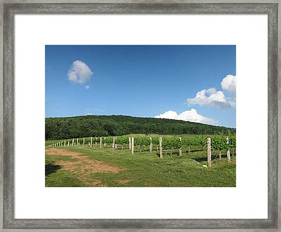 Vineyards In Va - 12127 Framed Print by DC Photographer