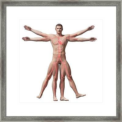 Vitruvian Man Veins Framed Print by Sebastian Kaulitzki