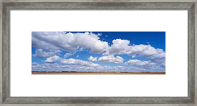 Wheat Crop Growing In A Field Framed Print by Panoramic Images