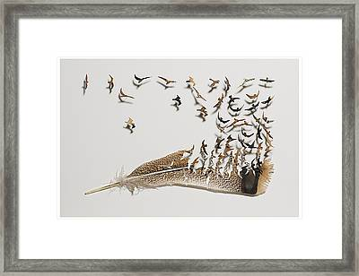 Where Feathers Come From Framed Print by Chris Maynard
