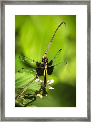 Dragonfly Widow Skimmer  Framed Print by Christina Rollo