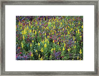 Wildflower Meadow Framed Print by John Greim