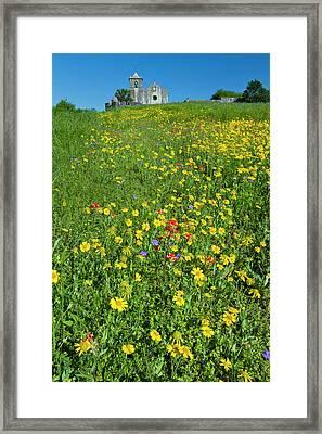 Wildflowers At Presidio La Bahia Framed Print by Larry Ditto