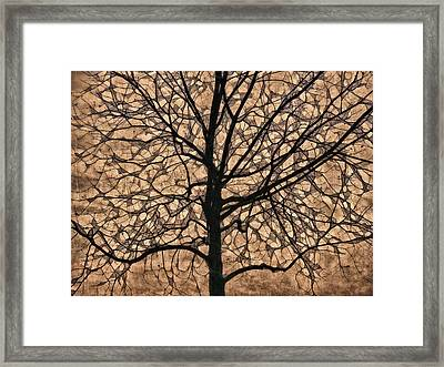 Windowpane Tree In Autumn Framed Print by Carol Leigh