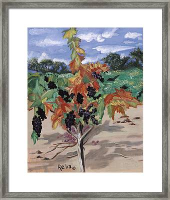 Wine Country Framed Print by Reba Baptist