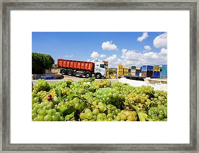 Wine Industry Framed Print by Photostock-israel