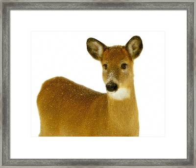 Winter Deer Framed Print by Gothicrow Images